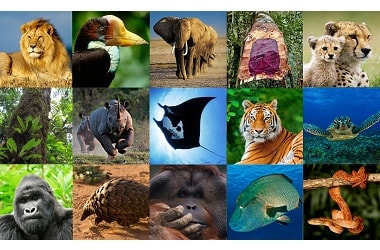 CITE commends India for tackling wildlife trade